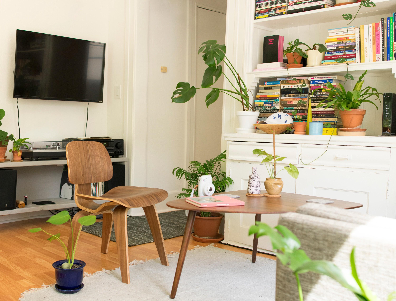 appartement, lumineux, plante